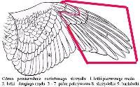 Czytaj o Pielęgnacja i żywienie ptaków