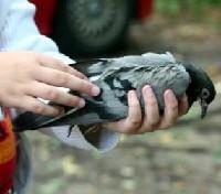 Czytaj o Zapobieganie chorobom ptaków ozdobnych