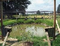 Czytaj o Woliera dla kaczek domowych