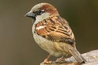 Czytaj o Karmnik dla dzikiego ptactwa
